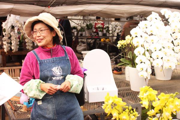らん蘭広場の胡蝶蘭通販