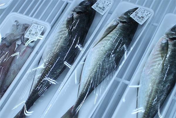 shimanoshiki04
