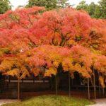 2018糸島の紅葉を楽しもう♪【癒される糸島紅葉スポットまとめ5選】
