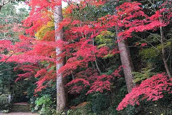 11月末〜12月にかけては紅葉が特に美しい時期だそう!