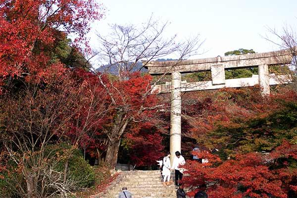 太宰府観光の竃門神社紅葉が素晴らしい鳥居そば