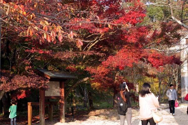 竃門神社の紅葉入口付近