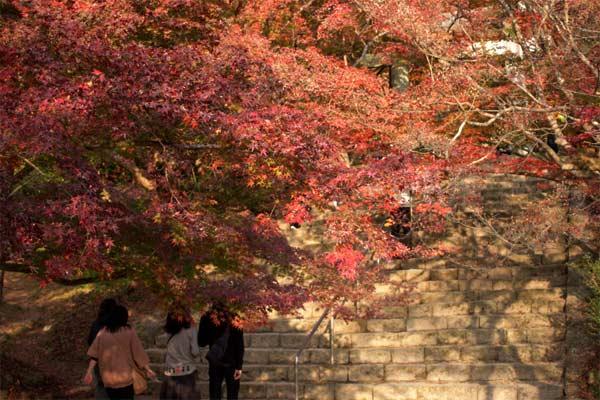 竃門神社の紅葉、入口から階段