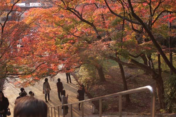 竃門神社の紅葉が素晴らしい