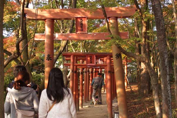 紅葉が素晴らしい竃門神社のお稲荷さん