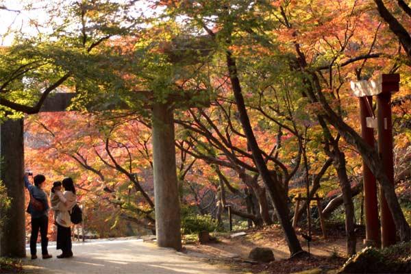 竃門神社の紅葉でインスタ映え