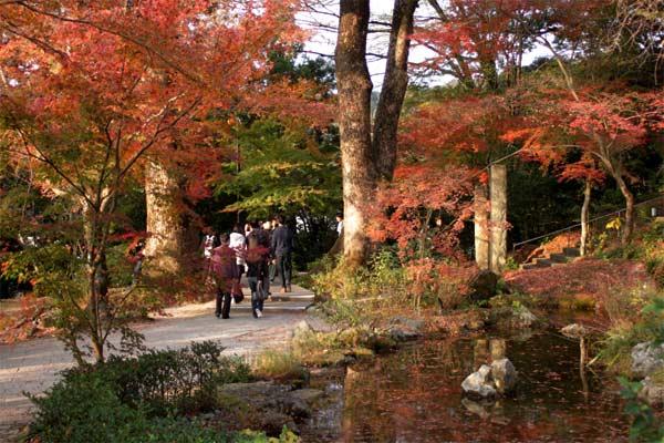 竃門神社の紅葉と池