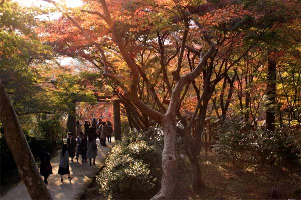 人気の竃門神社紅葉スポット