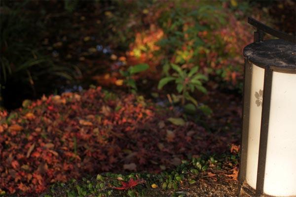 竃門神社の夜は紅葉がスポットライトで照らされるんです