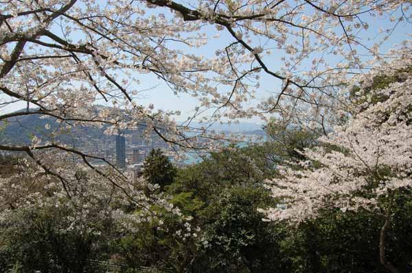 めかり公園桜s