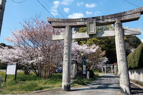 太宰府日吉神社の桜s