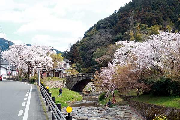 秋月桜の観光名所目鏡橋01