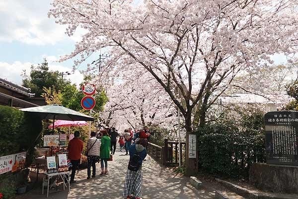 秋月桜の名所・杉の馬場01s