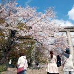太宰府観光 桜お花見名所6選!菜の花おすすめスポット特集2020