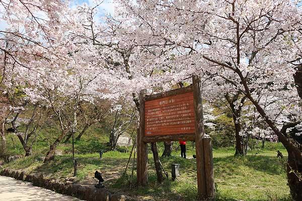 太宰府竃門神社の桜03s