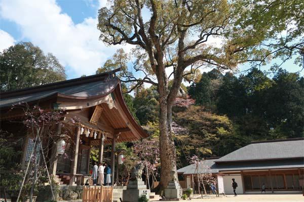 太宰府・竃門神社01