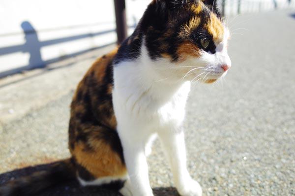 相島猫07s