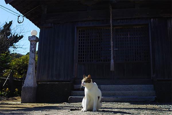 相島猫10s