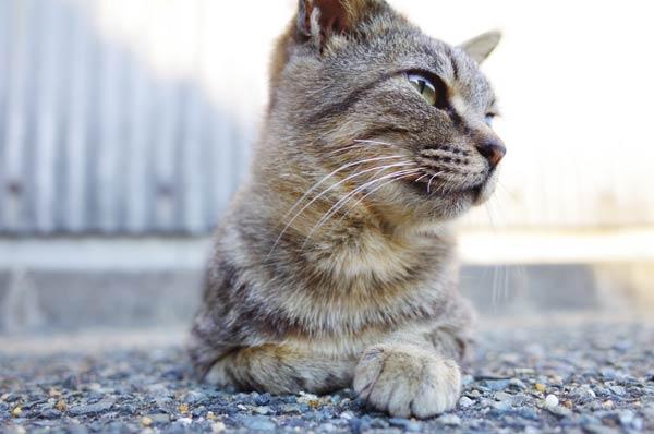 相島猫11s