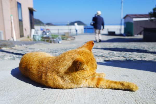 相島猫16s