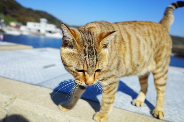 相島猫17s