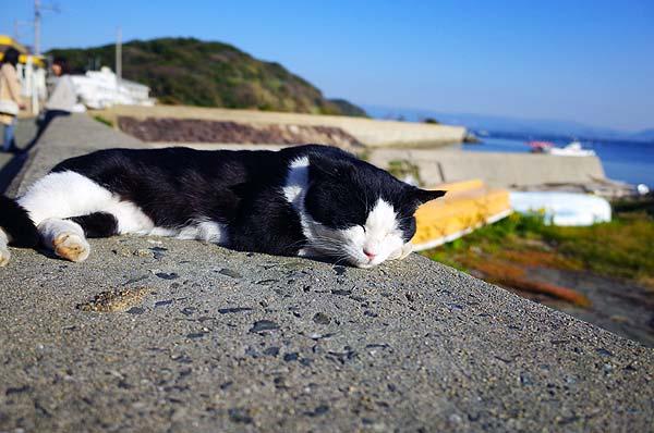 相島猫18s