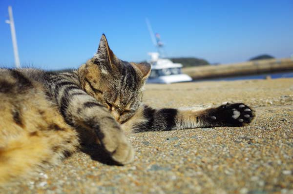 相島猫19s