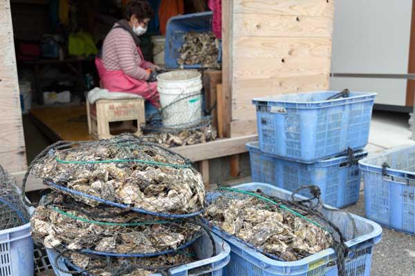 糸島カキ-牡蠣小屋裏側での研磨作業