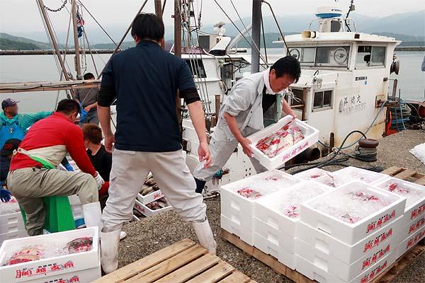 糸島めん鯛の天然真鯛の水揚げを手伝う糸島漁協の鹿毛課長