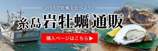 糸島カキ|岩牡蠣通販のご紹介