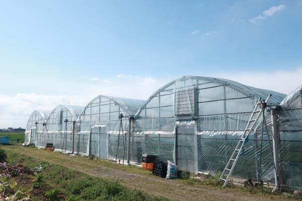 福岡で新規就農であまおういちごを栽培する彩果農園のハウス