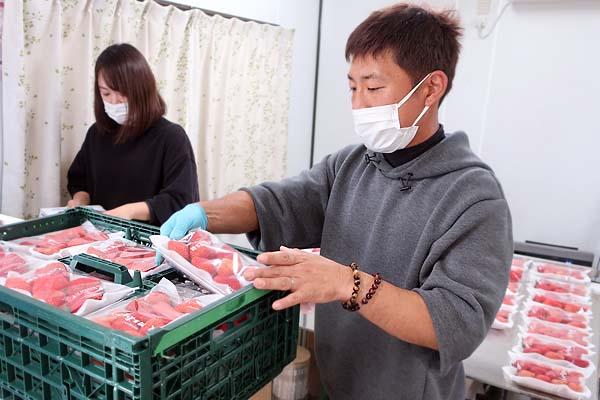 福岡で新規就農であまおういちごを栽培する彩果農園のパッキング